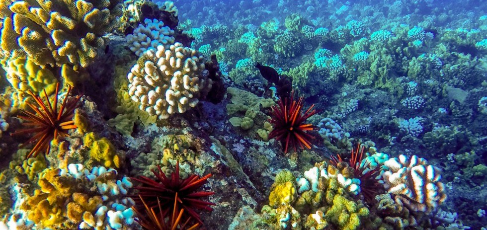 Snorkel Molokini Crater in Maui with Redline Tours